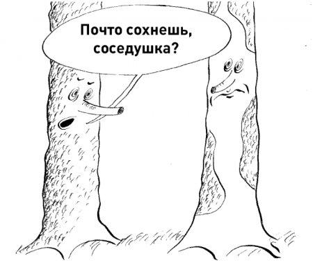 Усыхание лесов в Архангельской области